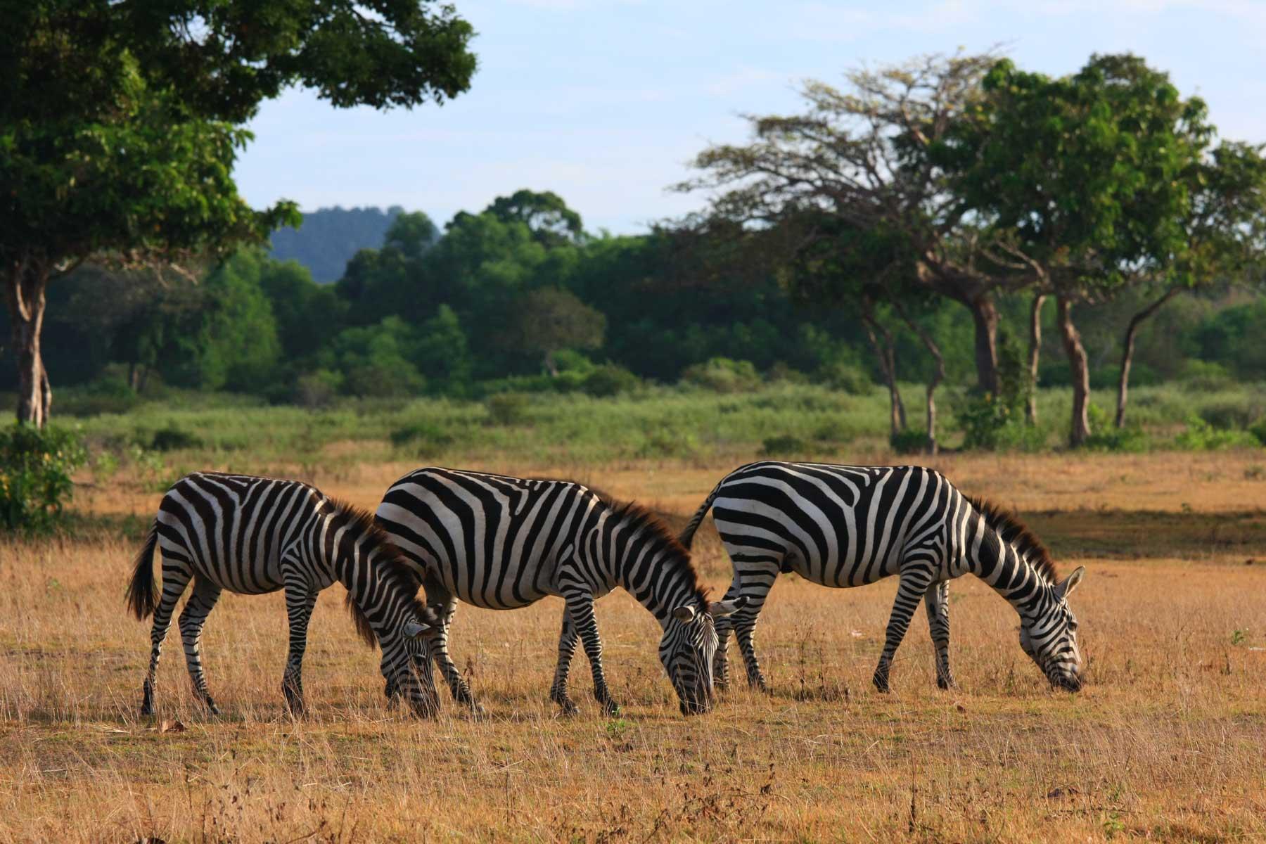 Coron Safari Tour